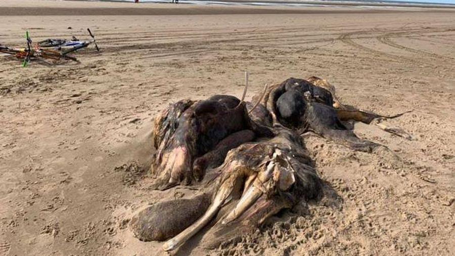 Sinh vật khổng lồ ngoài hành tinh lộ xương sườn trên bờ biển khiến ngư dân sợ hãi