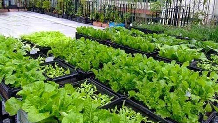 Cách chống thấm sân thượng, ban công khi trồng rau, nuôi cá