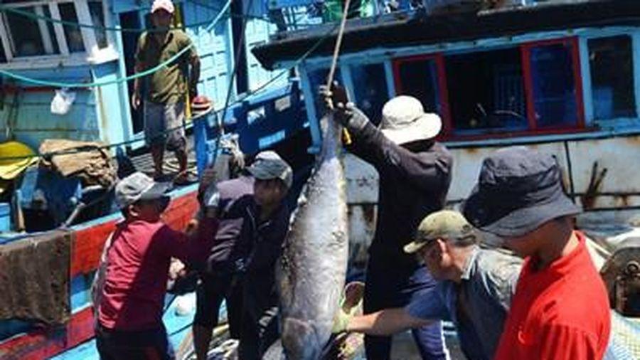 Phú Yên phát huy tiềm năng khai thác và chế biến thủy, hải sản