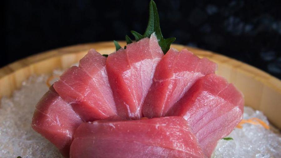 Sự thật tàn khốc sau miếng sushi cá ngừ siêu đắt đỏ