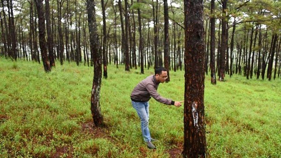 Đắk Nông: Rừng dọc Quốc lộ 14 bị bức tử