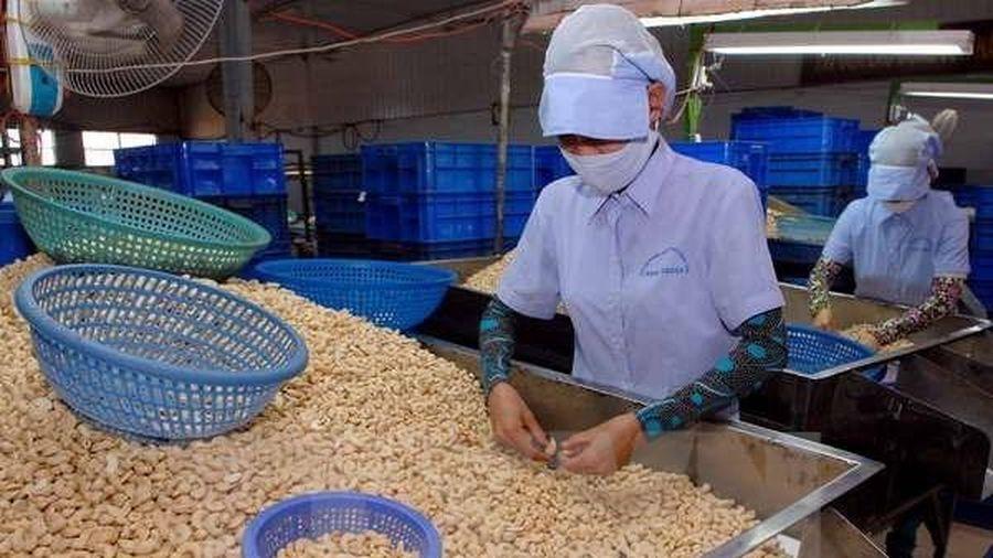 Ngành điều hạ mục tiêu xuất khẩu xuống 3,2 tỷ USD do dịch COVID-19