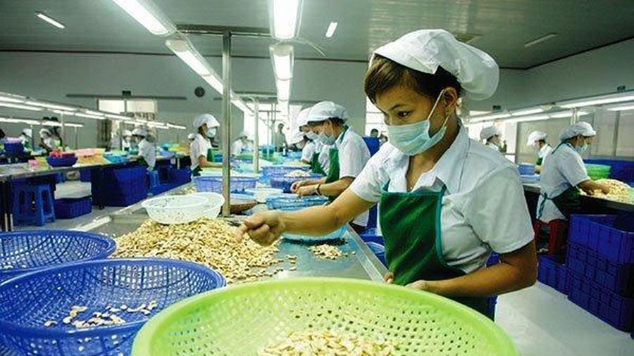 Xuất khẩu hạt điều trong quý III/2020 có khả năng sẽ giảm mạnh