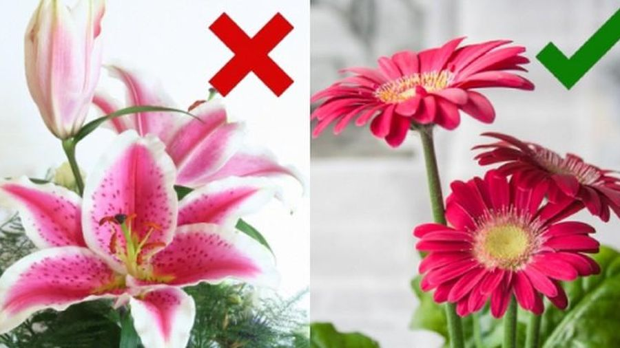 5 loại hoa nên bày lên bàn thờ để gia chủ may mắn
