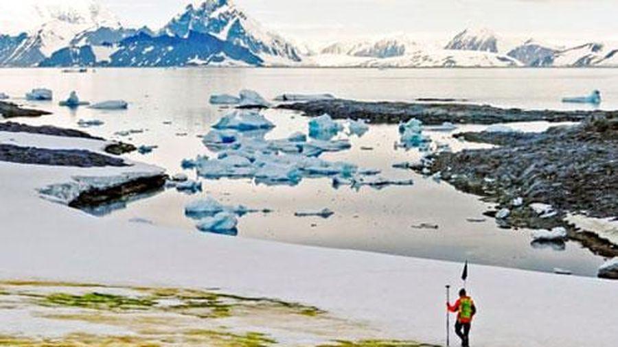 Nam Cực 'chuyển xanh', xuất hiện hệ sinh thái mới
