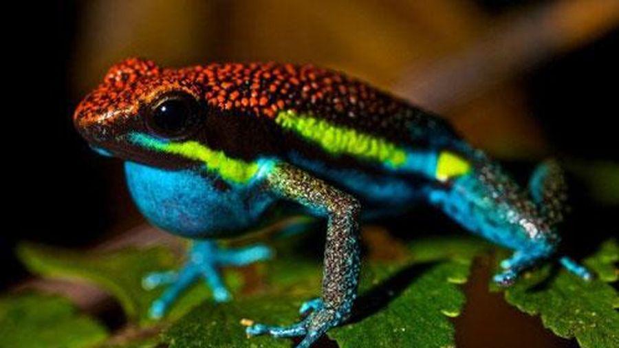 Khám phá những loài động vật tuyệt đẹp nhưng lại sở hữu nọc độc chết người