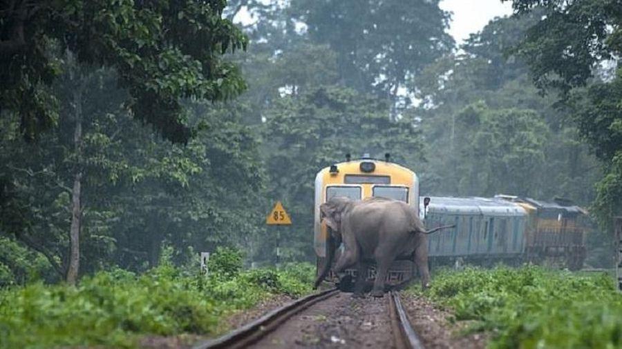 Đàn voi kéo nhau băng qua đường ray, cắt mặt đoàn tàu đang lao tới