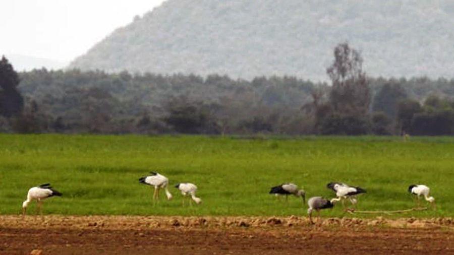 Đàn chim quý của thế giới bay về Lòng hồ Trị An kiếm thức ăn