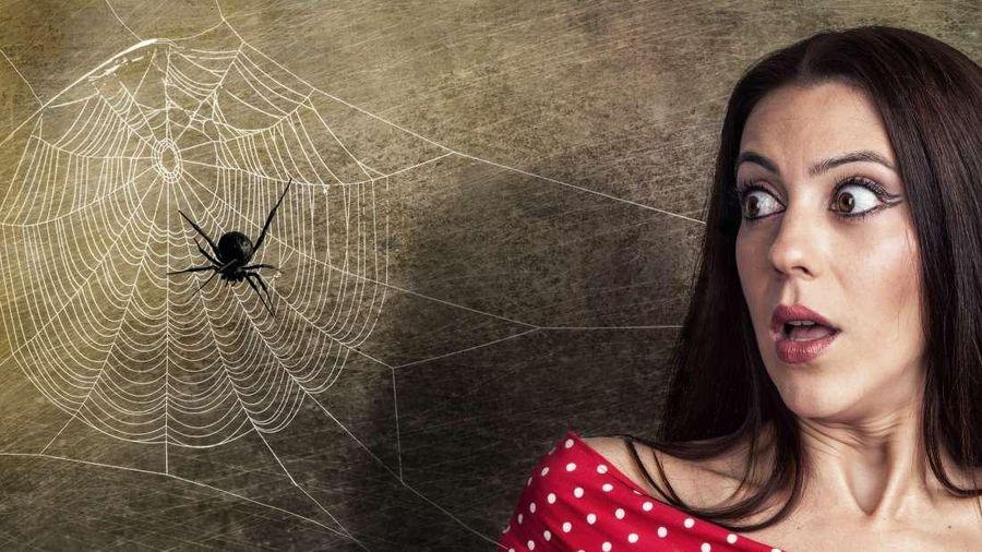 Sự thật ít người biết về hội chứng sợ nhện