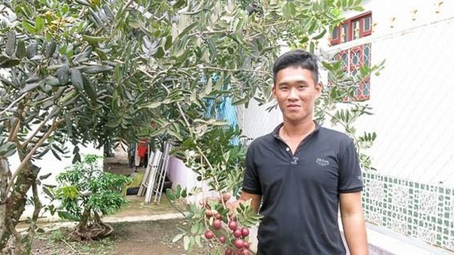Thêm 1 nhà vườn ở miền Tây lai tạo thành công nhãn tím lạ mắt, thơm ngon