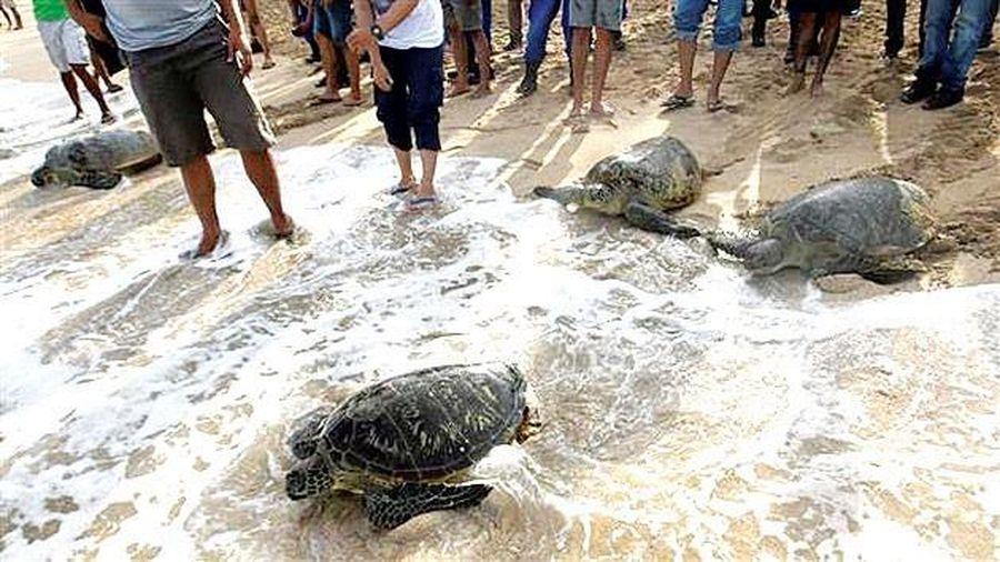 Indonesia thả hơn 10.000 rùa con về đại dương
