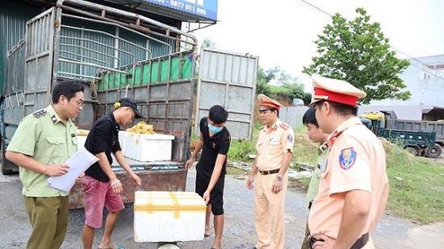 Phú Thọ: xử phạt, tiêu hủy gần 600kg nội tang động vật đang bị phân hủy và có mùi hôi thối