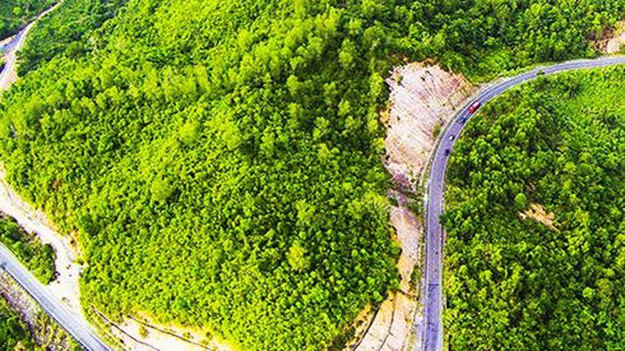 Khó đạt mục tiêu độ che phủ rừng