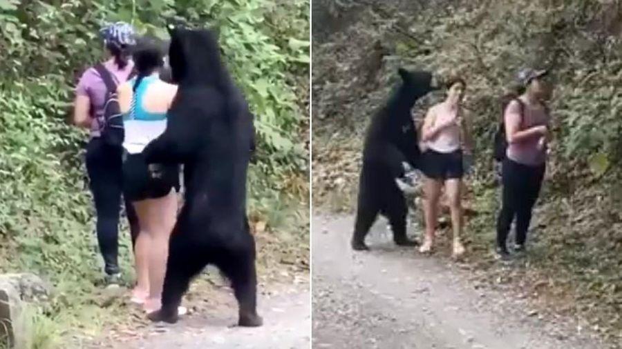 Dân Mexico giận dữ do gấu đen bị thiến sau khi ngửi tóc cô gái