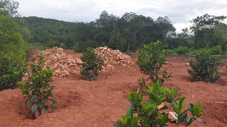 Huyện Thủy Nguyên, Hải Phòng: Người dân tự do mua bán đất rừng phòng hộ