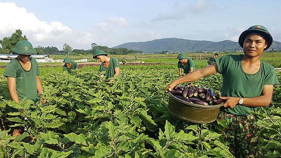 Quân khu 3 tham gia phát triển kinh tế - xã hội địa bàn