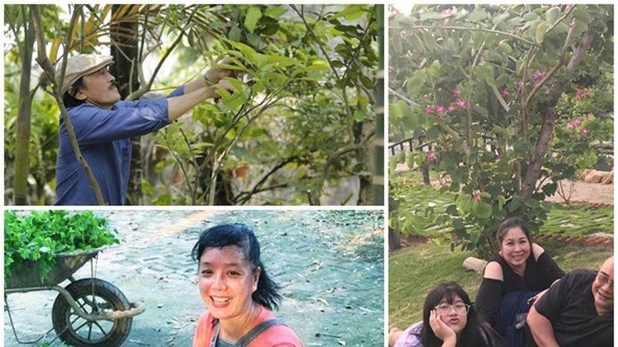 Mãn nhãn cơ ngơi đón tuổi 'xế chiều' của sao Việt