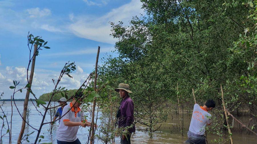Việt - Hàn chung sức phục hồi rừng ngập mặn