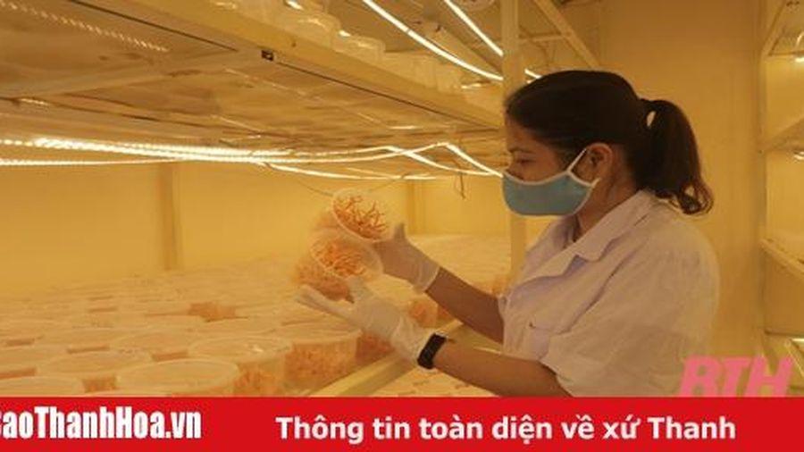 Ứng dụng công nghệ cao vào sản xuất nấm đông trùng hạ thảo ở Hội Làm vườn và Trang trại