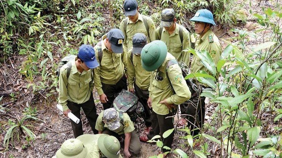 Đề xuất lập lực lượng cảnh sát rừng thay kiểm lâm
