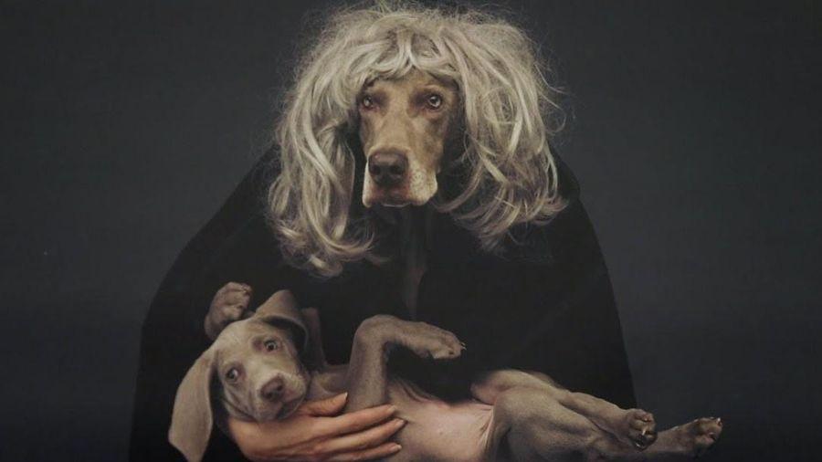Nhiếp ảnh gia 45 năm chụp hình chó