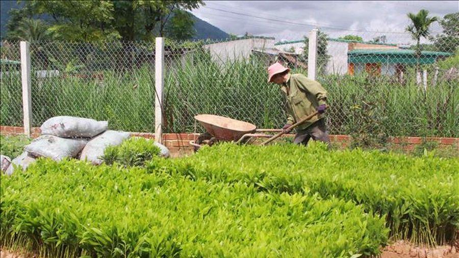 Xây dựng Nghị định về quản lý giống cây trồng lâm nghiệp