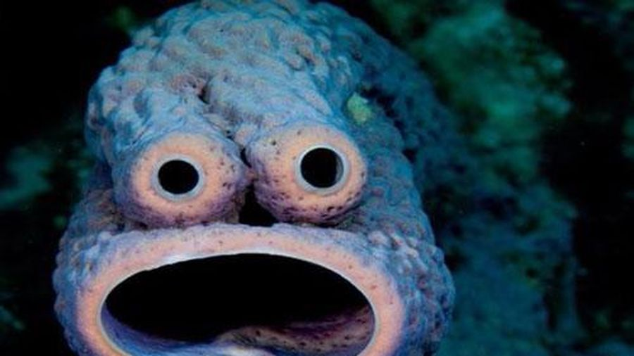 Những loài sinh vật kỳ lạ, nhưng lại đẹp tuyệt dưới đáy biển