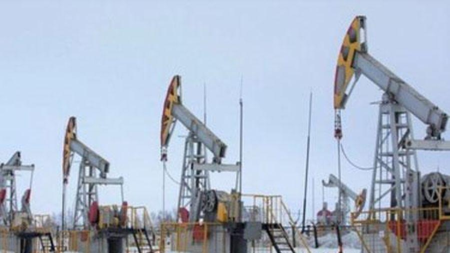 Giá xăng, dầu (11/8): Tăng trở lại