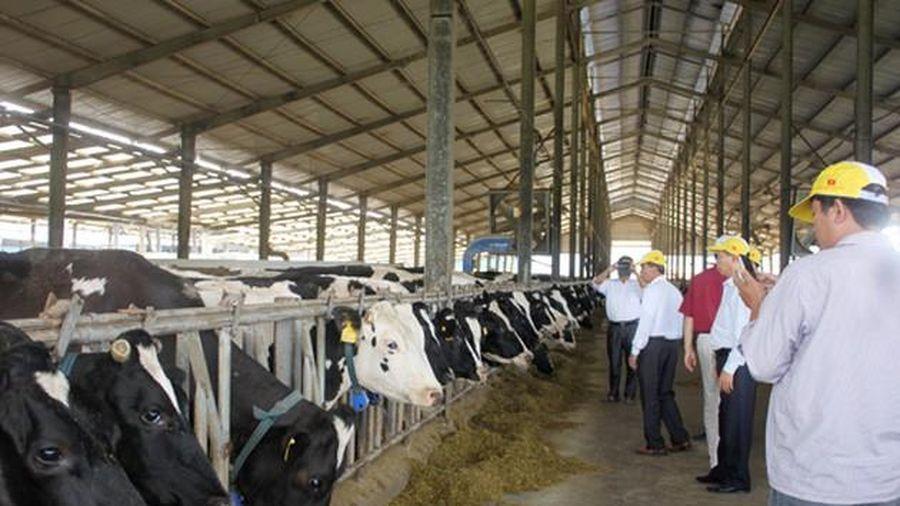 Mộc Châu Milk chào bán gần 39,2 triệu cổ phiếu cho nhóm cổ đông Vinamilk