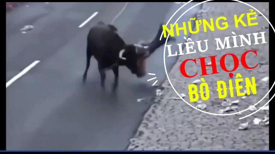 Lễ hội kỳ quặc chọc cho bò điên húc