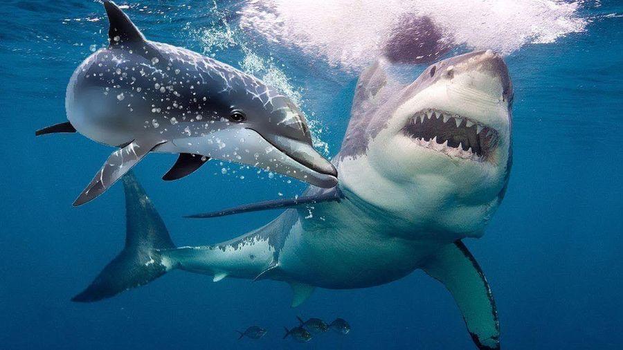 Vì sao 'hung thần đại dương' phải khiếp sợ cá heo?