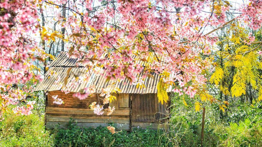 Nghìn hoa đua sắc quanh năm ở Đà Lạt