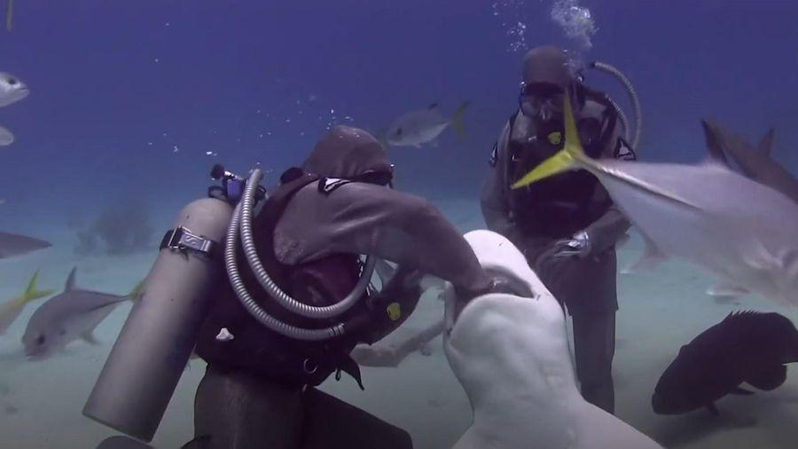 Người phụ nữ 25 năm giải cứu, gỡ 300 móc câu trong miệng cá mập