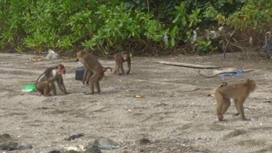 Quảng Ninh: Thả động vật hoang dã về môi trường tự nhiên
