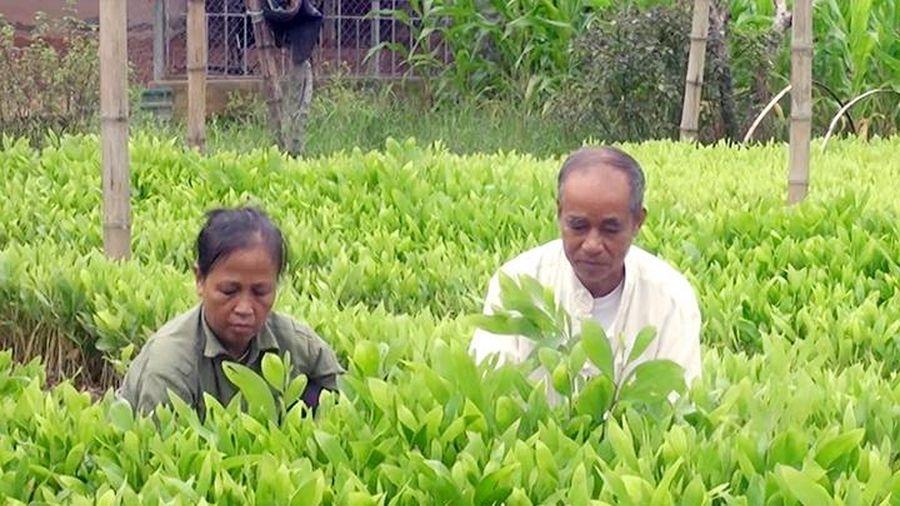 Mở rộng diện tích rừng trồng theo tiêu chuẩn quốc tế