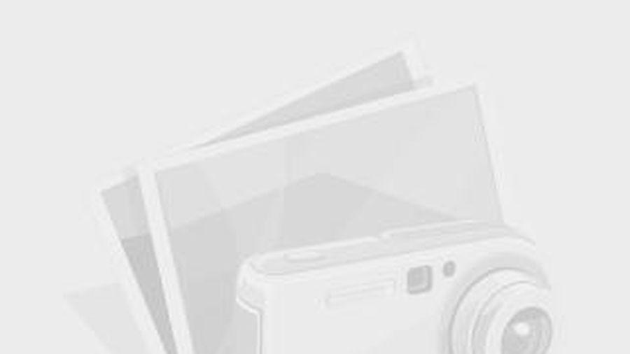 Thư mời quan tâm Gói thầu: Cung cấp trang thiết bị y tế cho Đội quản lý, huấn luyện và sử dụng chó nghiệp vụ thuộc Cục Điều tra chống buôn lậu