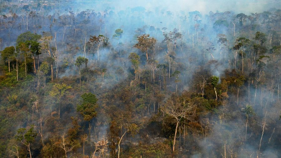 Các nước vùng Amazon cam kết bảo vệ vùng rừng nhiệt đới Amazon