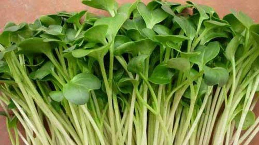 Hướng dẫn cách trồng rau mầm cải ngọt tươi ngon, đơn giản tại nhà