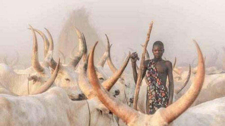 Bí ẩn bộ lạc dùng nước tiểu và phân bò để tắm gội nhưng nhất quyết không ăn thịt bò