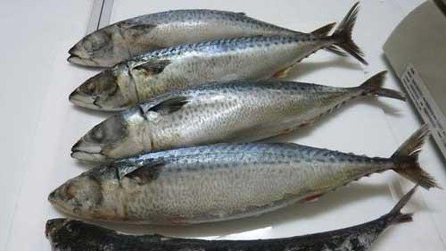 Mẹo hay giúp khử mùi tanh của cá biển nhanh chóng