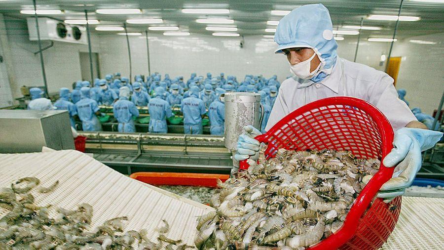Dự báo xuất khẩu tôm tăng trưởng khả quan 2 quý cuối năm