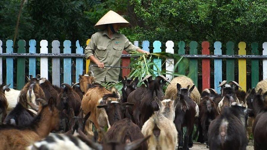 Tình người đong đầy dành cho các con vật trong mùa COVID-19