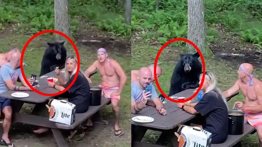 Chú gấu hồn nhiên tham gia picnic cùng một gia đình ở Mỹ