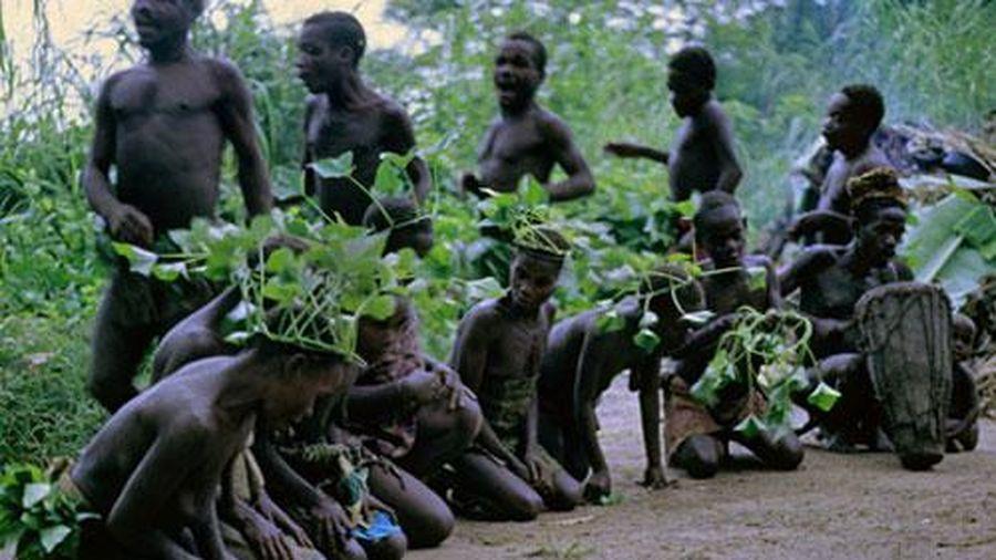 Bí ẩn về tộc người Pygmy, đại diện cổ xưa nhất của lục địa đen