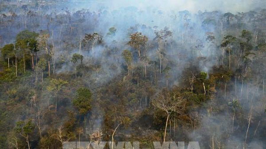 Sáng kiến bảo vệ rừng Amazon - 'lá phổi của Trái Đất'