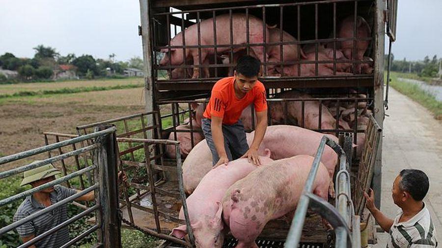 Giá lợn hơi giảm nhẹ