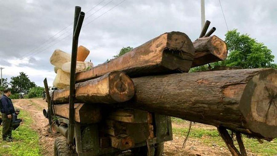 Gia Lai: Phát hiện âm tặc dùng xe độ chế chở gỗ lậu