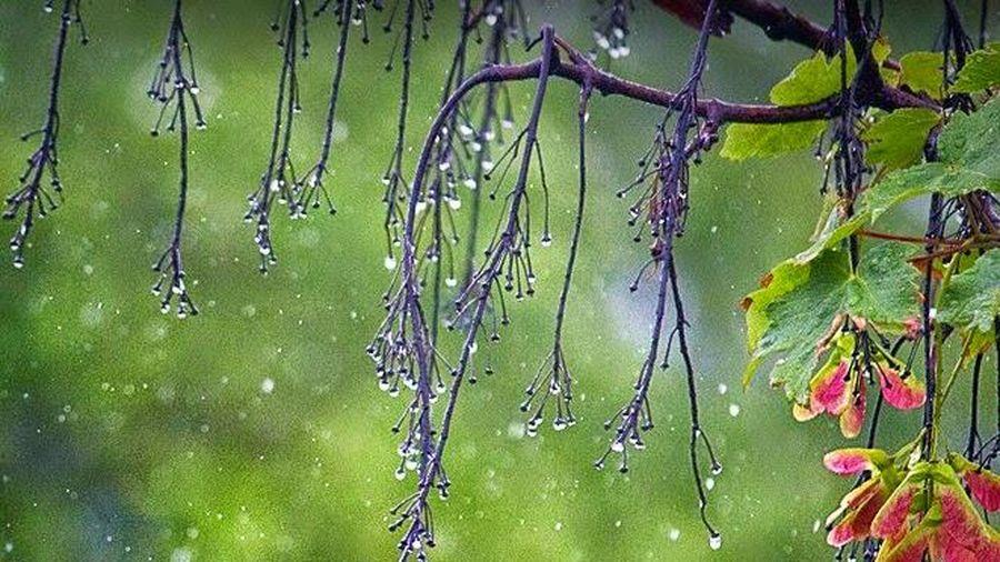 Thời tiết 15-8: Mưa dông khắp cả nước ngày cuối tuần