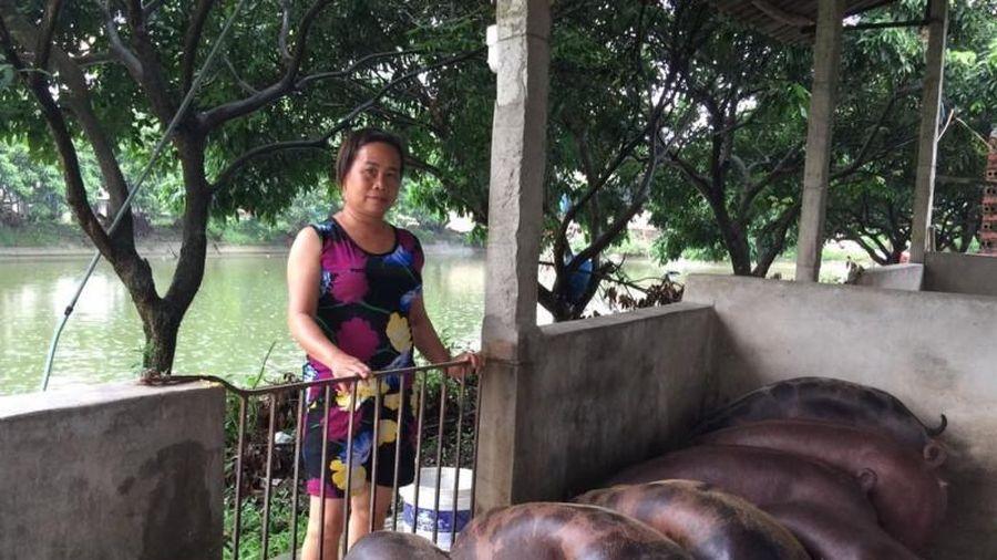 Hiệp Hòa: Có xã còn 2 hộ giữ được đàn lợn sau DTLCP