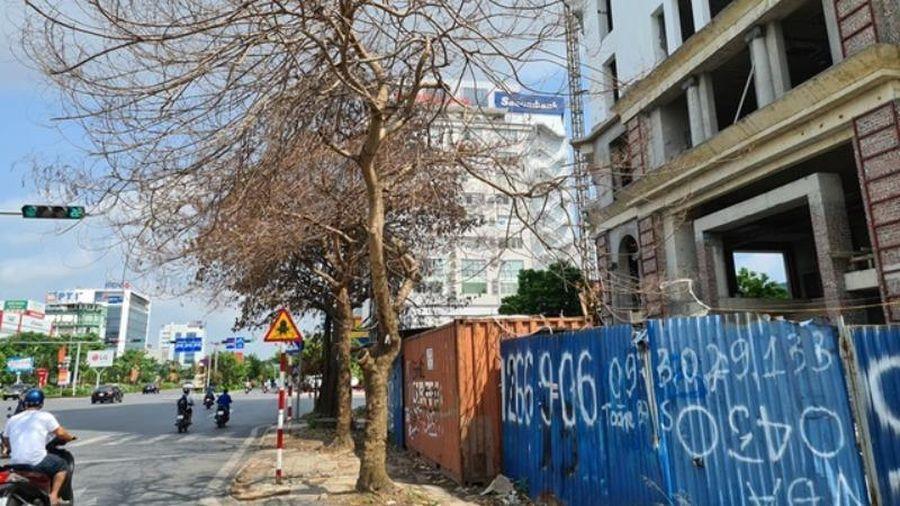 Hải Phòng điều tra nghi án 'ám sát' cây xanh